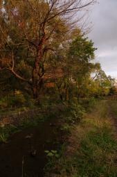 良い感じの秋の夕暮れ