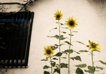IMG_0057350bg.jpg