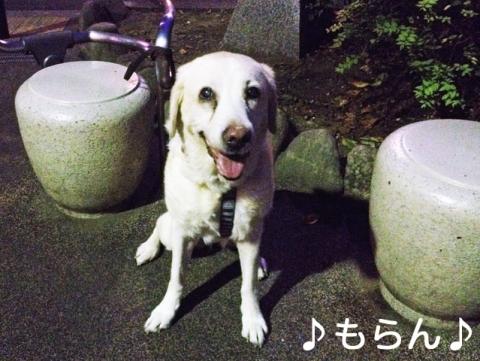140919 ぶらぶら夕散歩-2