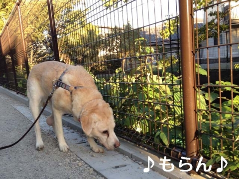 141029 秋晴れ散歩-1