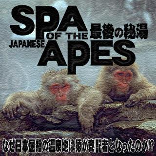 猿の温泉1