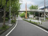 mominoki_20120804