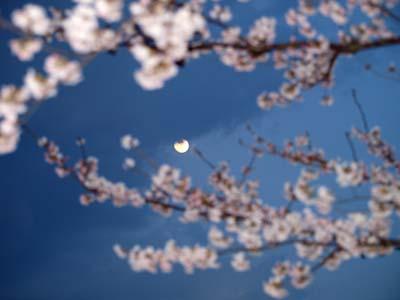 20120405kaikigessyoku1tentaisyo-_20120405m.jpg
