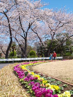 20120407syorijousakura18-_20120407m.jpg