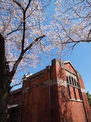 20120407syorijousakura8-_20120407m.jpg