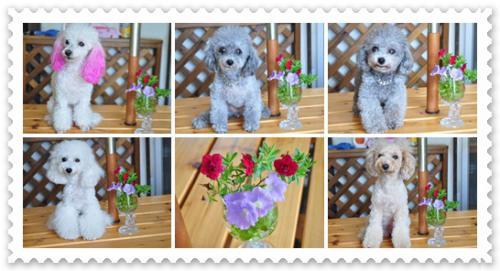 5ワンと花