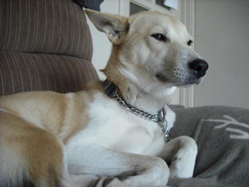 哲学する犬