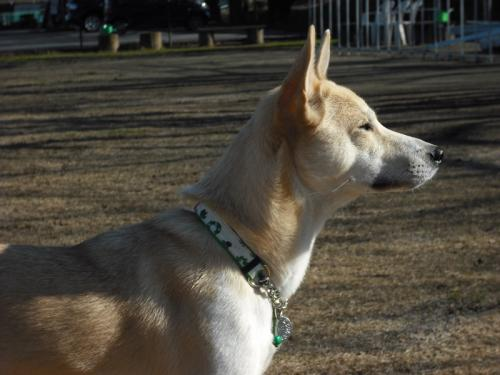 哲学する犬2