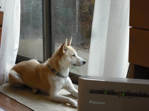 哲学する犬4