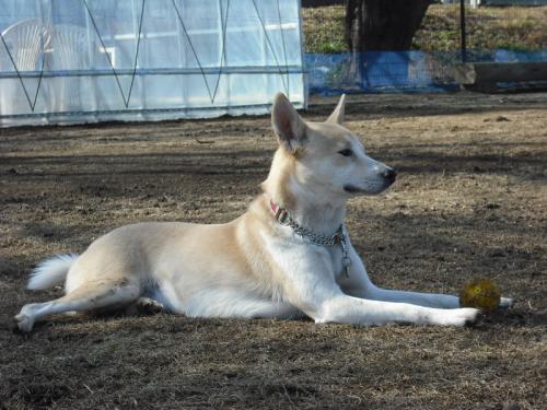 哲学する犬5