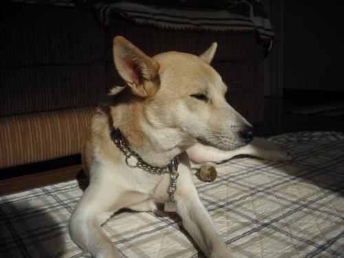 哲学する犬6