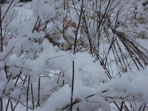 二度目の雪4