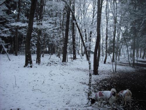 二度目の雪6