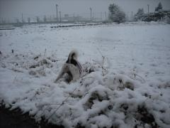 二度目の雪7