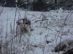 二度目の雪9