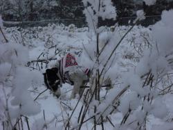 二度目の雪11