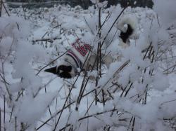 二度目の雪12