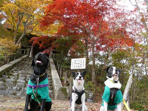 紅葉と犬2010