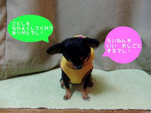 CIMG6027-1.jpg