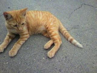 目線は明後日の方向な猫さん♪>とうせんぼだニャン?