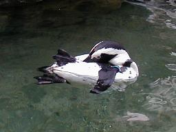 サンシャイン国際水族館