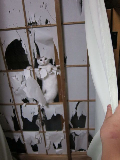 1000 Images About Bathroom Door On Pinterest Shoji
