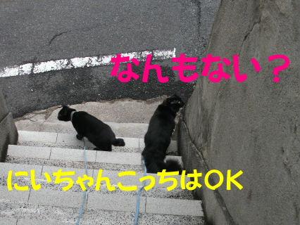 2011_05010039.jpg