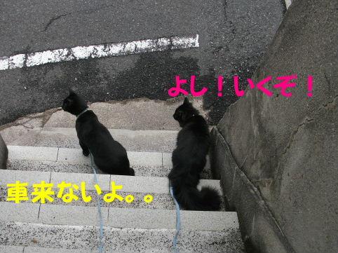 2011_05010040.jpg