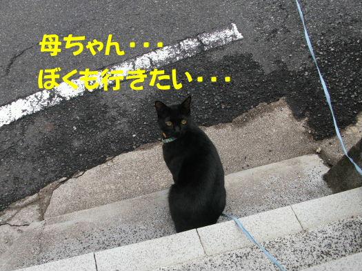 2011_05010044.jpg