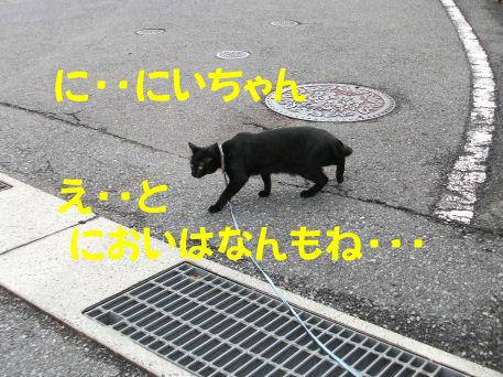 2011_05010047.jpg