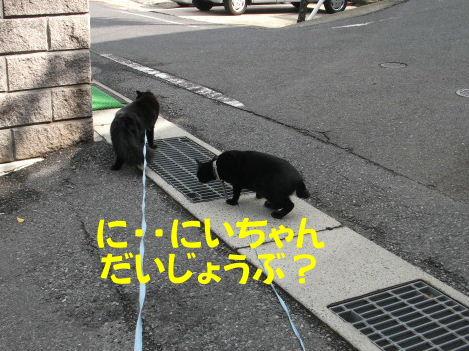 2011_05010048.jpg