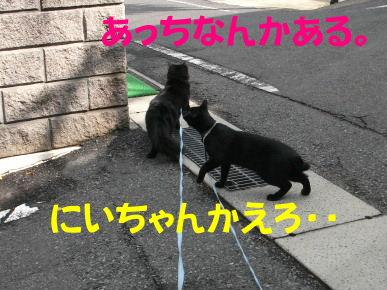 2011_05010049.jpg