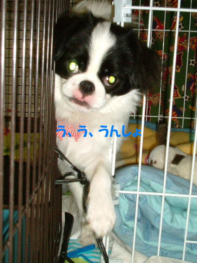 2011_05150316.jpg