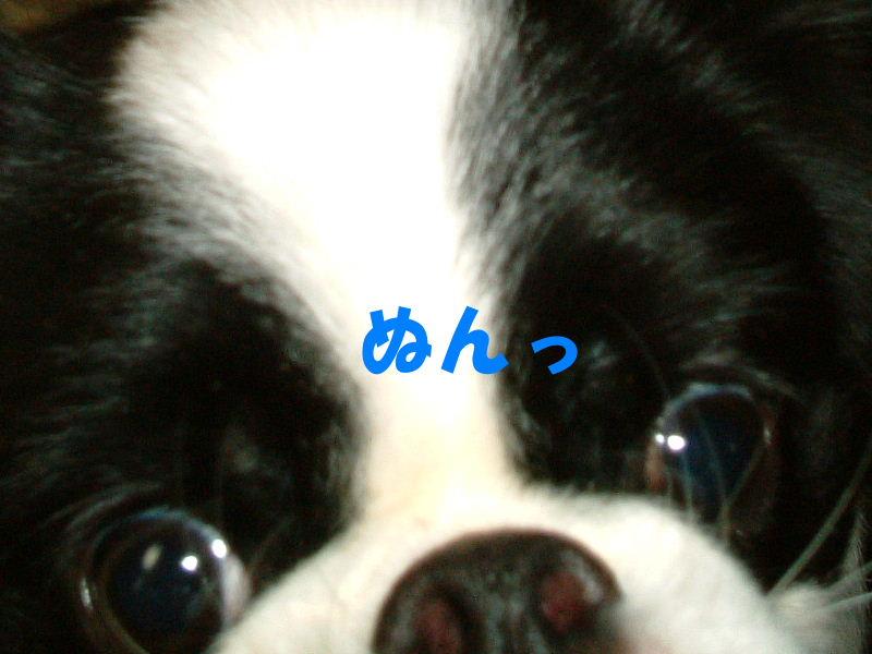 2011_05150458.jpg