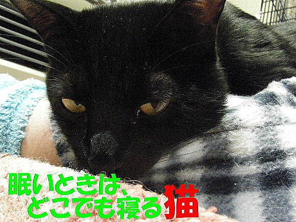 2011_05250004.jpg