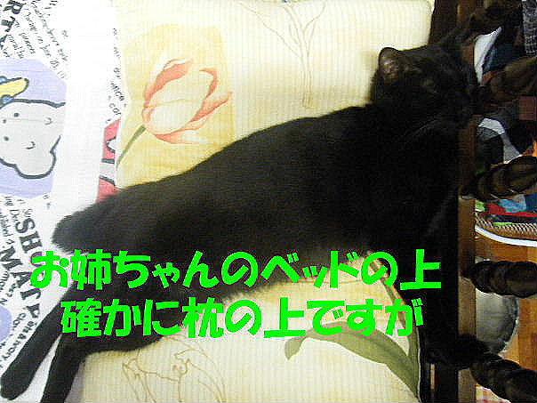 2011_05250024.jpg