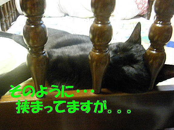 2011_05250026.jpg