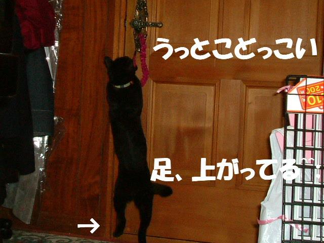 2011_06070165.jpg