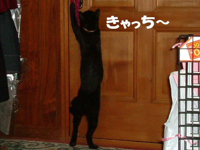 2011_06070166.jpg