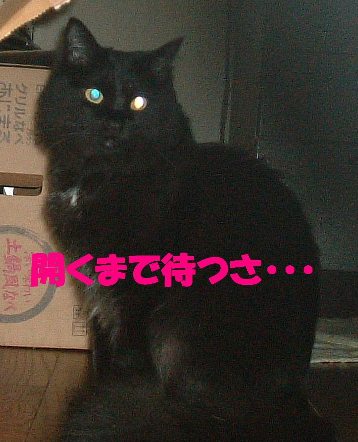 2011_06070167.jpg