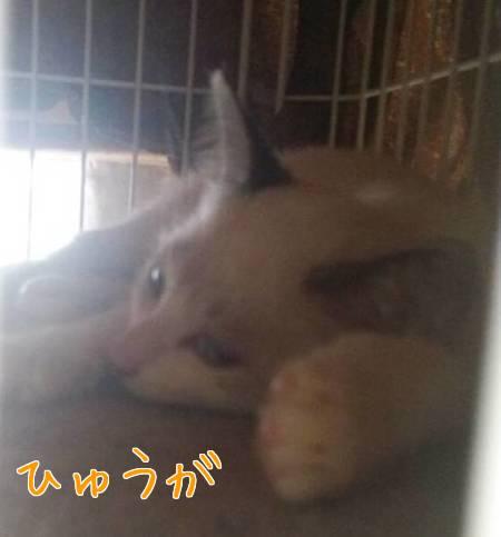 PBS5F6ZzyFogo0o1411620148_1411620222.jpg