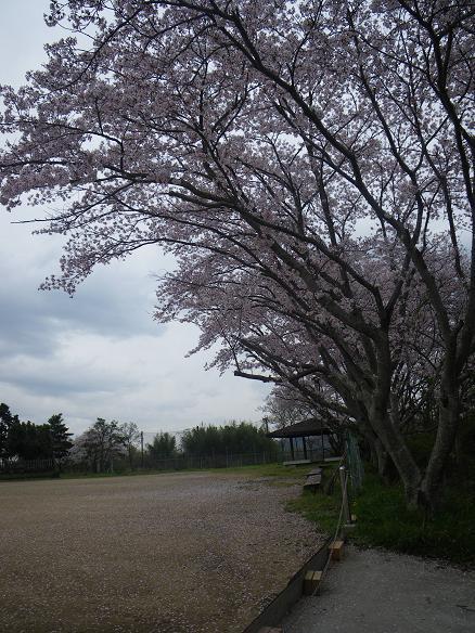 04.16桜