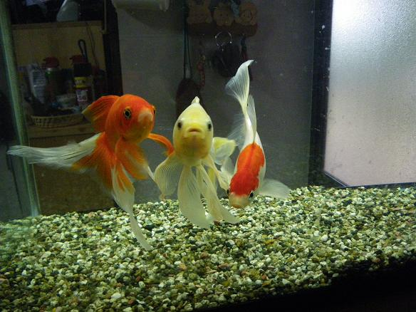 05.24金魚