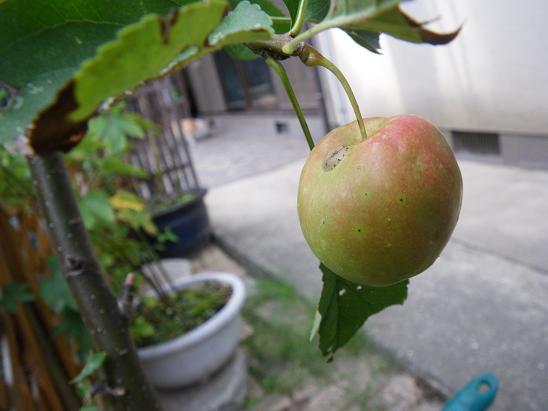 09.24林檎1