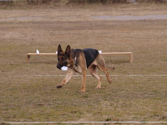 0223S犬2
