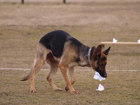 0223S犬3