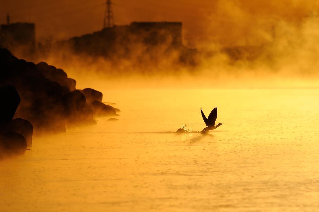 朝の多摩川
