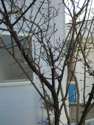 春が来た?・1