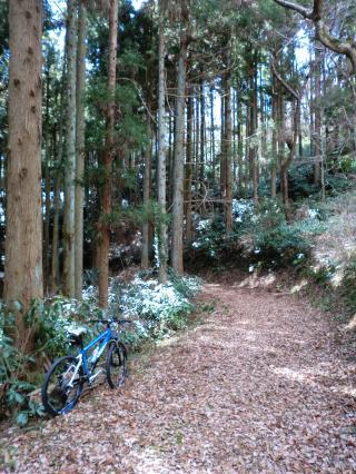 石森山トレイル・11