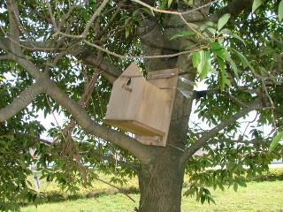 ???の巣箱